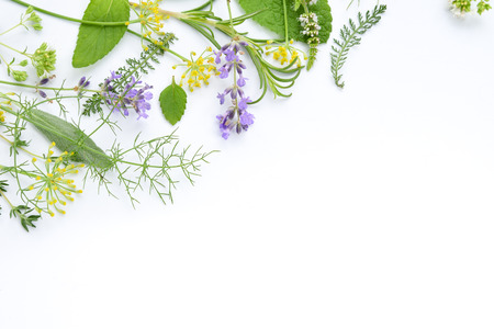 frame of herbal leaves and flowers Standard-Bild