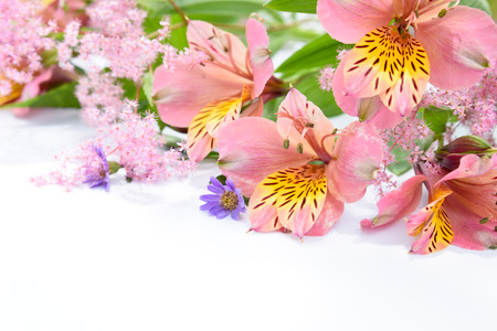 pink flowers on white backround