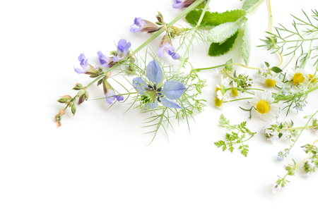 herbal flowers on white background