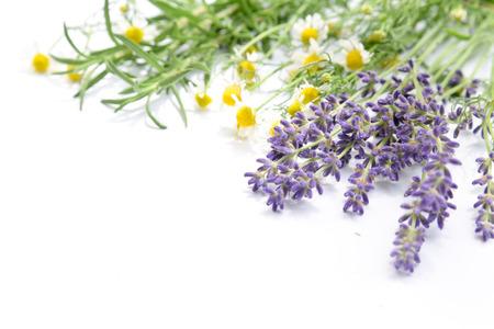 herbal flowers in white backround Standard-Bild
