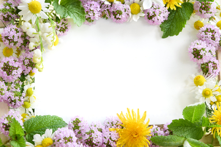 Het frame van kruiden bloemen Stockfoto - 64410517