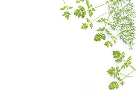frame of chervil leaves Standard-Bild