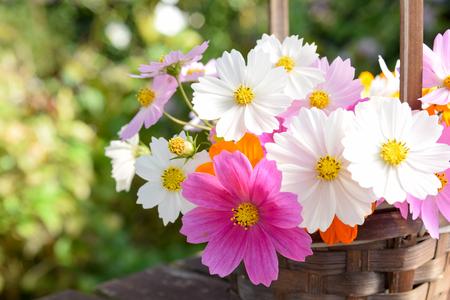 Kosmos bloemen in mandje