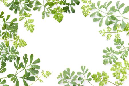 frame of green herbal leaves Standard-Bild