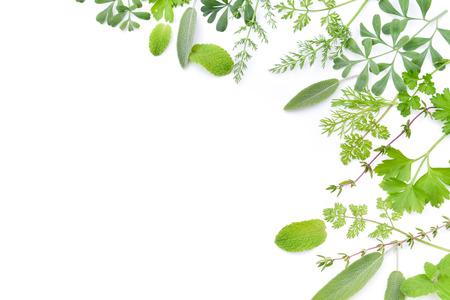 frame of green herbal leaves Foto de archivo