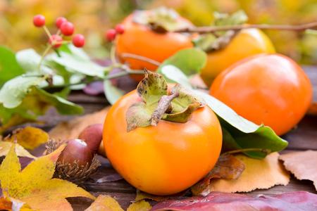 persimmon fruits in autumn Standard-Bild