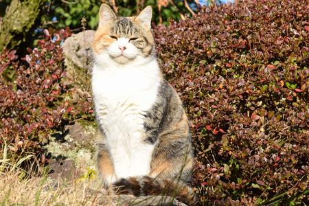 cat in garden Standard-Bild
