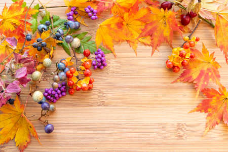 background frame with autumn plants leaves, seeds, and berries. Standard-Bild