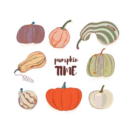 Hand drawn harvest illustration. Vector autumn drawing food. Cartoon Pumpkin Spice. Halloween time