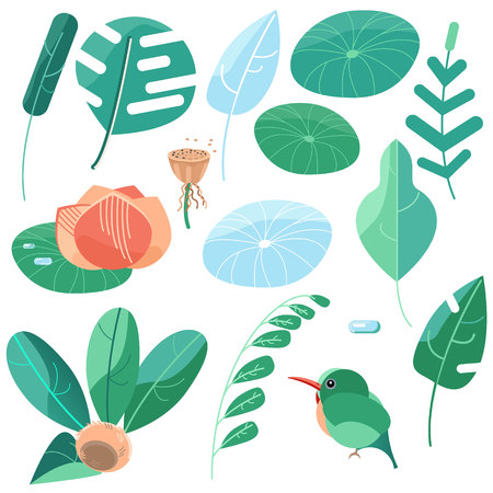 Set of Pictures summer style. Green sheets of monsters and other tropical plants