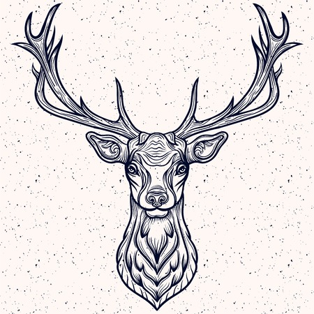 whitetail deer: Vector Illustration of a Whitetail Deer Head. Illustration