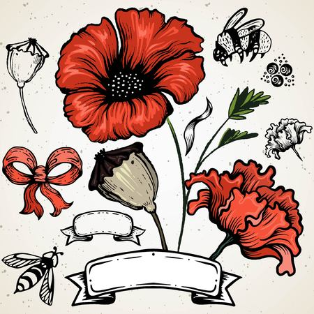 Poppy flower. Red poppies isolated on white background. Beautiful vintage drawing by hand. Engraving elegance style 免版税图像 - 125580255