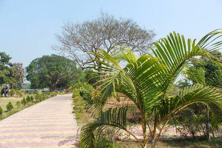 green plant at garden