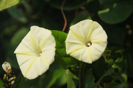 white flower in the garden Фото со стока