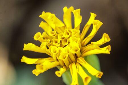 small yellow flower macro