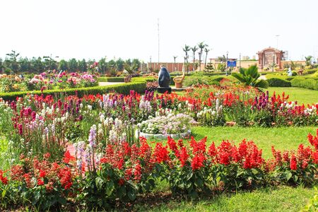 Flower plant in a park clean and green beautiful landscape Фото со стока