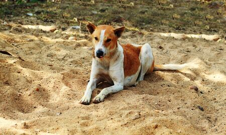dog sleeping or rest over the sand canidae