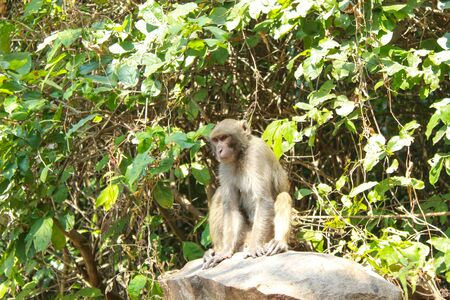 Monkey or simian sitting on a rock in a jungle closeup view