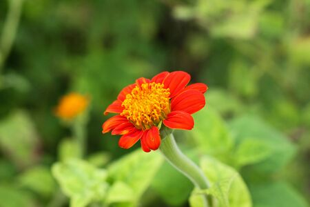 red color flower and plant beautiful nature Фото со стока