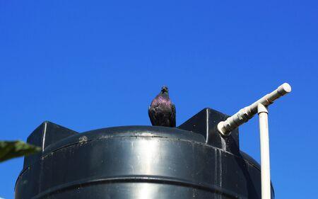 pigeon sitting over a water tank Фото со стока