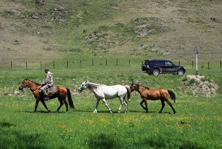 uomo a cavallo: Altai, Russia - 10 giugno, 2012: cavalli albero con un cavaliere su uno dei cavalli al contrario di una grande macchina su una strada Editoriali