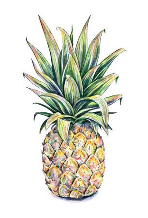 trabajo manual: Piña en un fondo blanco. Acuarela colorida ilustración. Fruta tropical. Trabajo manual