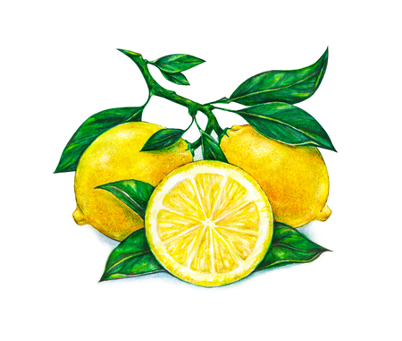 watercolour: Great illustration of beautiful yellow lemon fruits isolated on white background. Watercolor drawing of lemon
