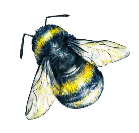 trabajo manual: Abejorro en un fondo blanco. Gráfico de la acuarela. arte insectos. Trabajo manual