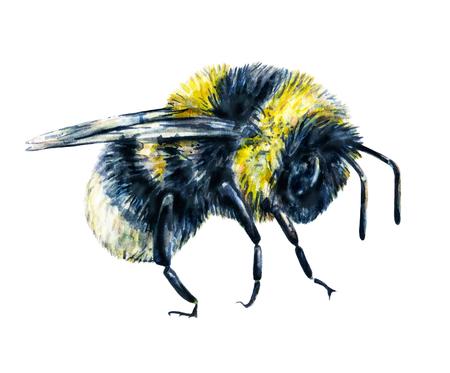 trabajo manual: Abejorro aislado en un fondo blanco. Gráfico de la acuarela. arte insectos. Trabajo manual. Vista lateral Foto de archivo