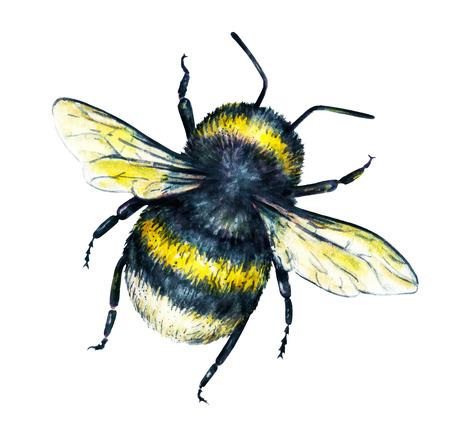 trabajo manual: Abejorro en un fondo blanco. Gráfico de la acuarela. arte insectos. Trabajo manual. Vista superior Foto de archivo