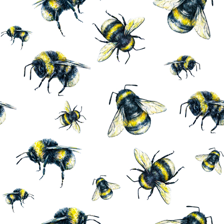 pollinate: Bumblebee on a white background. Watercolor drawing. Insects art. Handwork. Seamless pattern Stock Photo