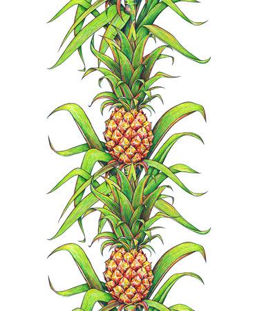 trabajo manual: Piña con las hojas verdes fruta tropical que crece en una granja. marcadores de dibujo piña frontera del modelo de marco vertical sin fisuras aisladas sobre un fondo blanco. Ejemplo de color para el diseño. Trabajo manual