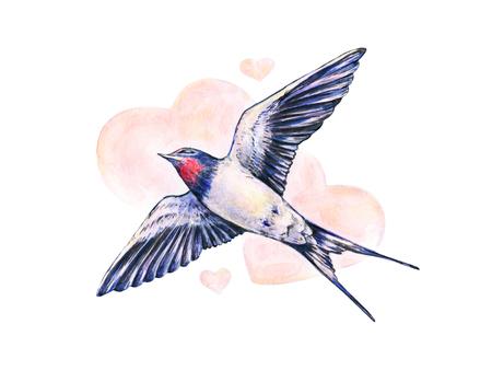 Beautiful swallow. Watercolor illustration. Spring bird brings love. Handwork Stock Photo