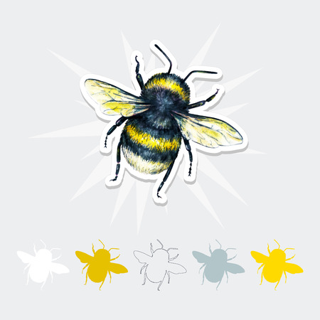 Bumblebee vector drawing. Insects art set. Handwork. Top view
