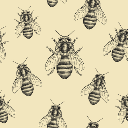 Bees texture. Seamless pattern. Realistic graphic illustration. Background. 版權商用圖片