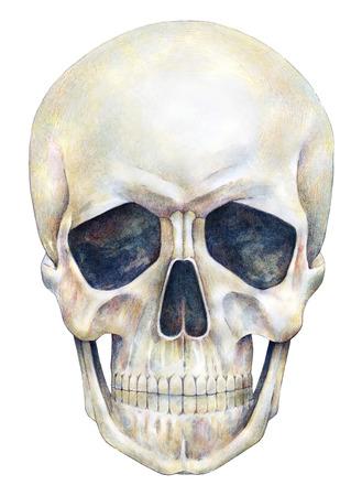 trabajo manual: persona cráneo humano está aislado en un fondo blanco. Gráfico de la acuarela. Cráneo trabajo hecho a mano ilustración del arte