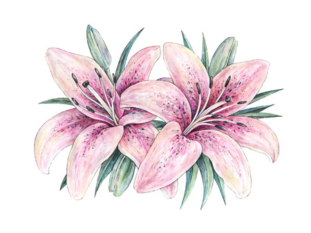 pistil: Pink lily flowers isolated on white background. Watercolor handwork illustration. Drawing of blooming lily with green leaves Stock Photo