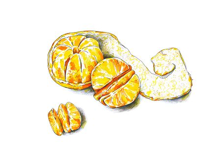 Tangerines fruits are isolated on a white background. Color sketch felt-tip pens. Tropical fruit. Healthy food. Handwork. Fast schematic drawing