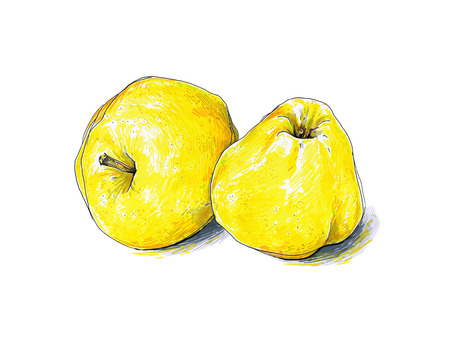 Yellow apples fruits are isolated on a white background. Color sketch felt-tip pens. Healthy food. Handwork. Fast schematic drawing