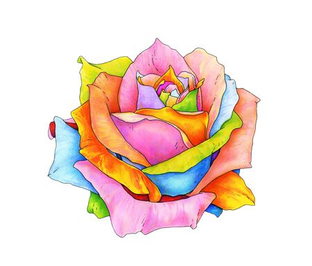 The rose with multi-colored petals is isolated on a white background. Handwork drawing markers. Magic flower illustration Stock Photo