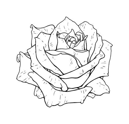 Illustrazione vettoriale monocromatica del fiore di rosa. Bella rosa isolata su sfondo bianco. Elemento per la progettazione del tatuaggio Vettoriali