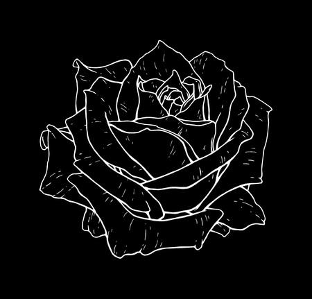 Rose flower monochrome vector illustration. Beautiful white rose isolated on black background. Element for design of tattoo print Illustration