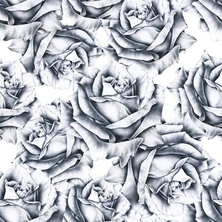 Black and white illustration rose flowers. Handwork monochrome drawing pencil. Seamless pattern in romantic style for design of fabrics