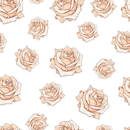 Drawn beige roses seamless background isolated on white. Flowers illustration front view. Pattern in romantic style for design of fabrics