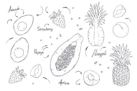 Set of vector fruits and berries isolated on white background. Handwork exotic summer draw. Black and white contours.