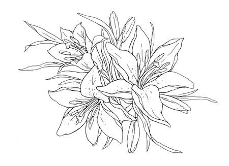 Lilies flowers monochrome vector illustration. Beautiful draw of tiger lilly isolated on white background. Element for design of greeting cards and invitations. 矢量图像