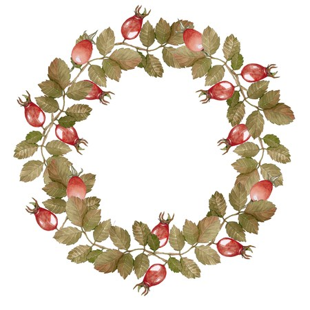 rose hips: Wreath-ripened berries of rose hips for decorating and design. Handmade drawing. Watercolor. Stock Photo