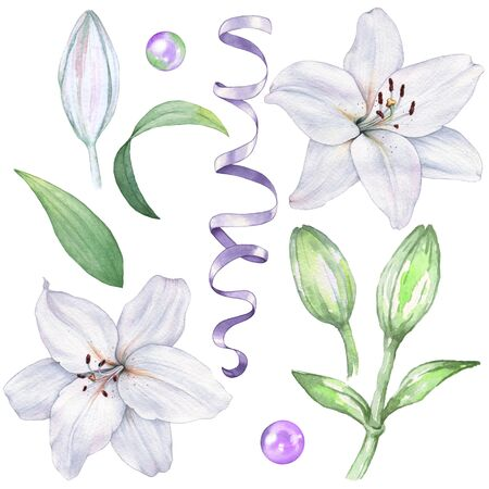 Set of isolated lilies to create a design. Watercolor illustration. Hand drawing