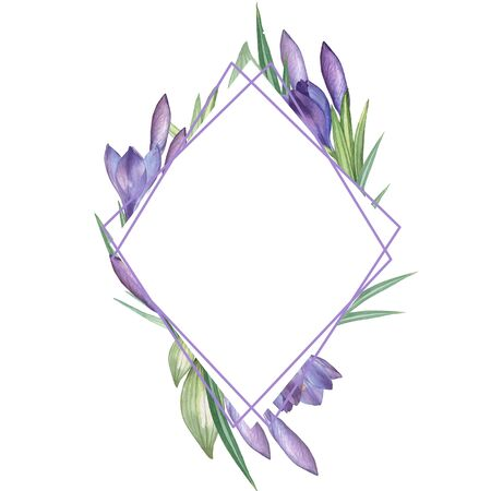 Crocus 13. Watercolor Floral frame. Watercolor illustration. Hand-drawing. Isolated on white Stock Photo