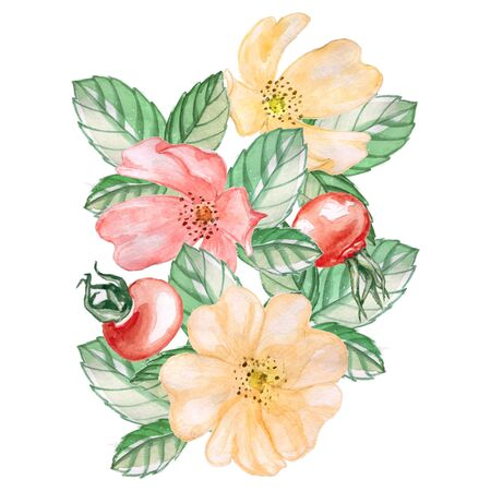 Ready-made composition of rosehip fruits and flowers. Watercolor illustration. Isolated on white. Banque d'images